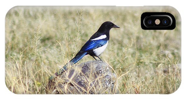 Black-billed Magpie IPhone Case
