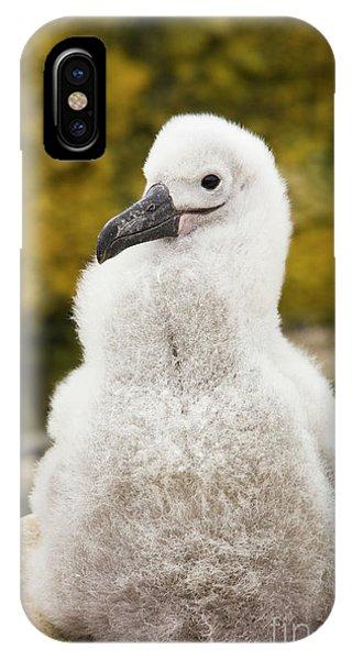 Albatross iPhone Case - Black Browed Albatross Chic by Yva Momatiuk John Eastcott