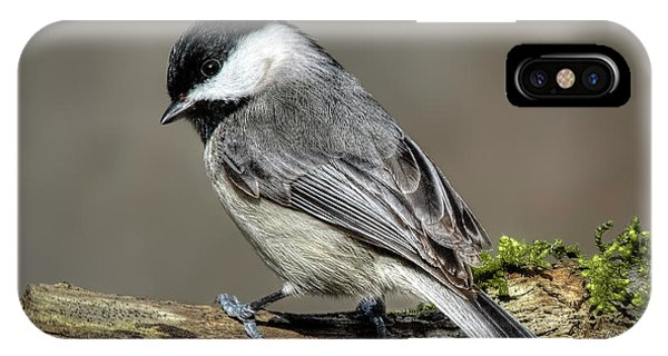 Black-capped Chichadee IPhone Case
