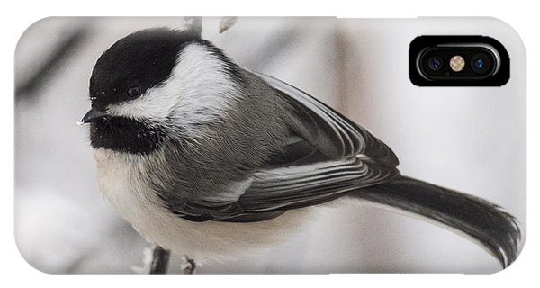 Black-capped Portait IPhone Case