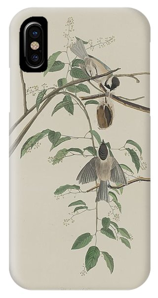 Titmouse iPhone Case - Black-capped Titmouse by Dreyer Wildlife Print Collections