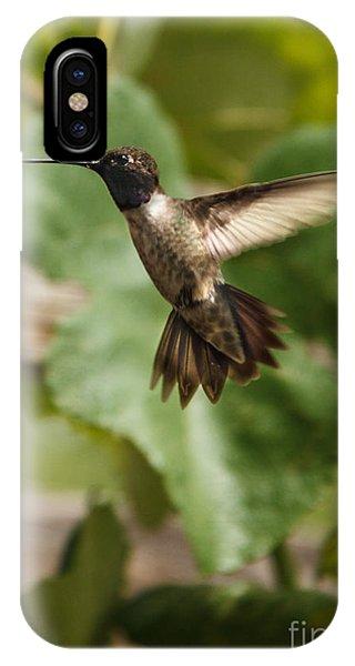 Beautiful Hummingbird iPhone Case - Black-chinned Hummingbird by Robert Bales