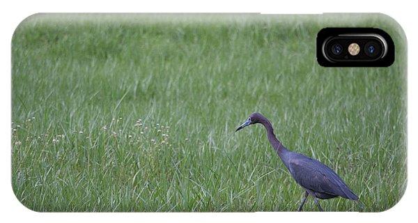 iPhone Case - Black Egret by Michael Rados