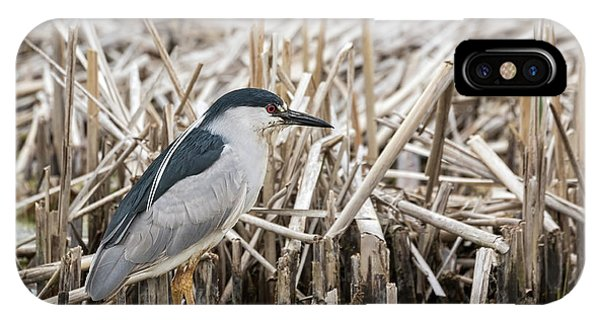 Horicon Marsh iPhone Case - Black-crowned Night Heron 2017-1 by Thomas Young