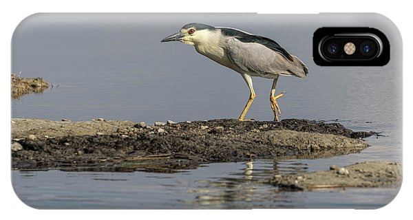 Horicon Marsh iPhone Case - Black-crowned Night Heron 2017-2 by Thomas Young