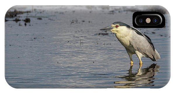 Horicon Marsh iPhone Case - Black-crowned Night Heron 2017-3 by Thomas Young