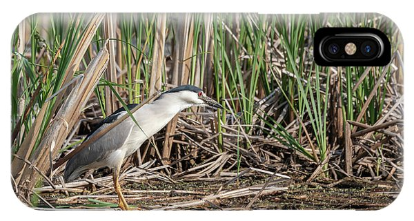 Horicon Marsh iPhone Case - Black-crowned Night Heron 2018-1 by Thomas Young