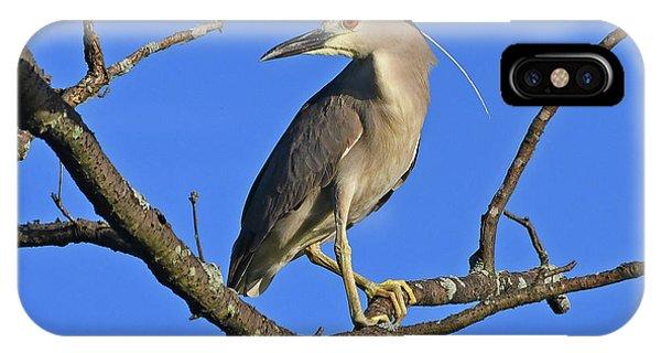Black-crowned Night Heron IPhone Case