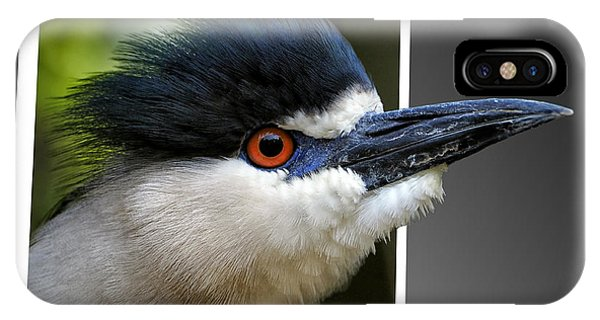 Black Crowned Night Heron Out Of Bounds IPhone Case