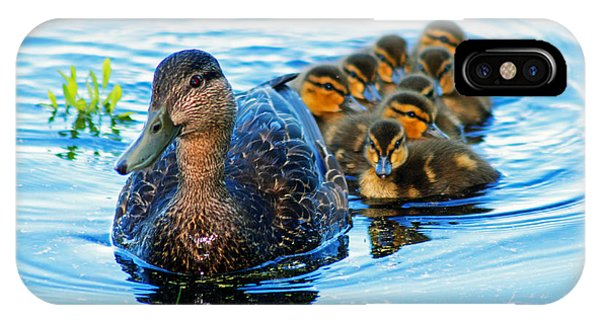Black Duck Brood IPhone Case