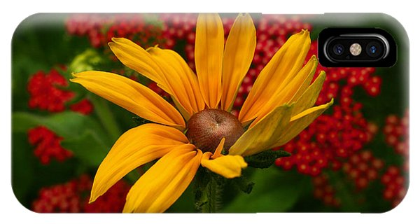 Black-eyed Susan And Yarrow IPhone Case