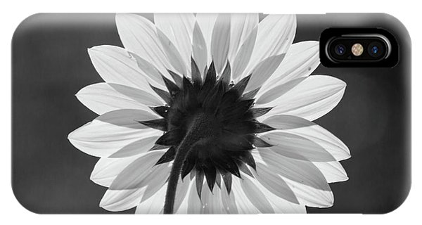 Black-eyed Susan - Black And White IPhone Case