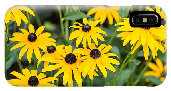 Black-eyed Susan Up Close IPhone Case