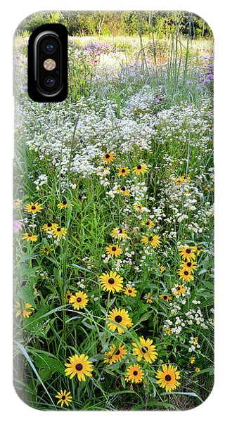 Black Eyed Susans And Company IPhone Case