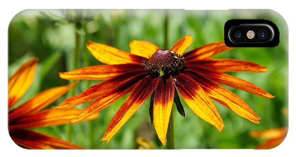 Black-eyed Susans IPhone Case
