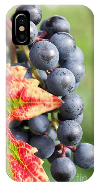 Black Grapes On The Vine IPhone Case