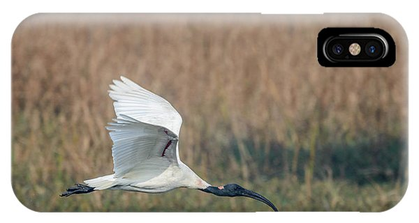 Black-headed Ibis 01 IPhone Case