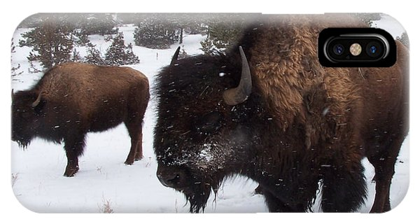 Black Hills Bison IPhone Case