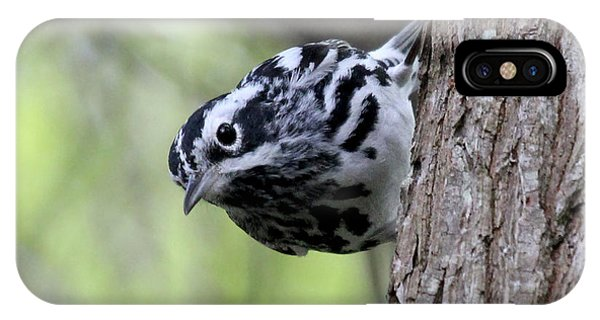Black-n-white Warbler IPhone Case
