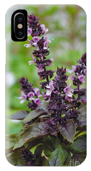 Black Opal Basil Flower IPhone Case