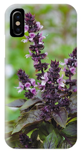 Black Opal Basil Flower IPhone Case