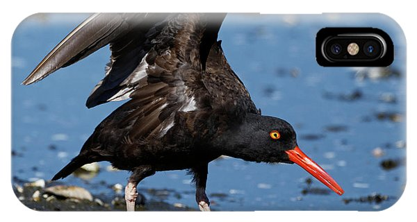 Black Oyster Catcher IPhone Case