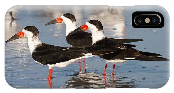 Black Skimmer Birds IPhone Case