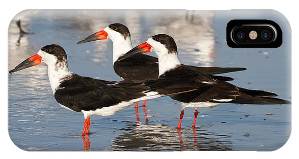 Black Skimmer Birds IPhone Case
