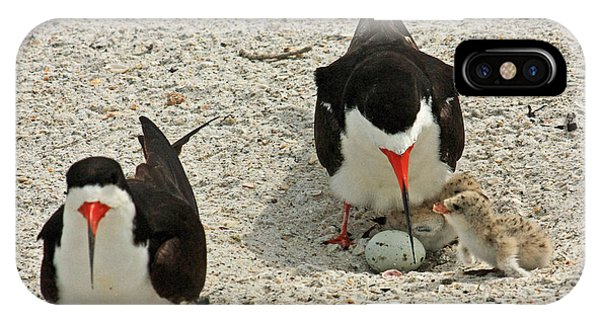 Black Skimmers And Babies IPhone Case