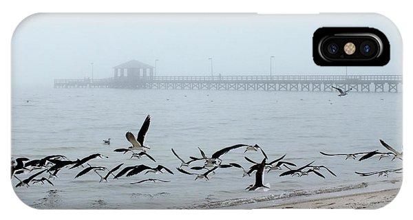 Black Skimmers - Biloxi Mississippi IPhone Case