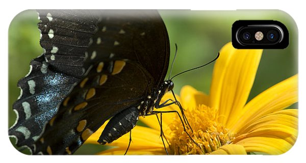 Black Swallowtail Drinking IPhone Case