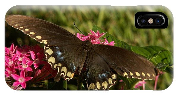Black Swallowtail Butterfly On Pentas IPhone Case
