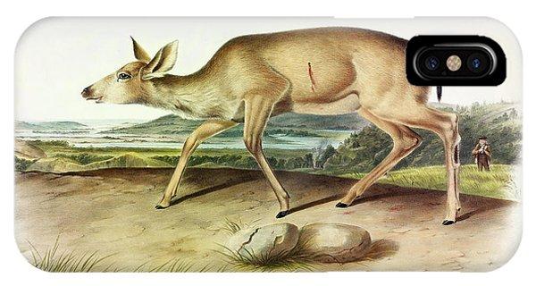Mule Deer iPhone Case - Black-tailed Deer by John James Audubon
