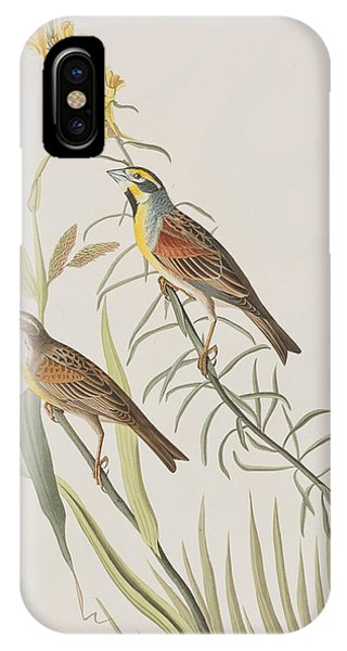 Bunting iPhone Case - Black-throated Bunting by John James Audubon