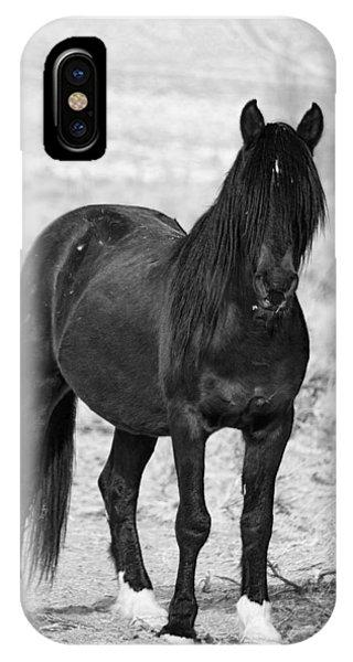 Black Wild Mustang Stallion IPhone Case