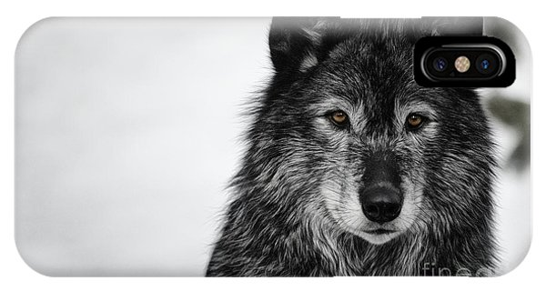 Black Wolf I IPhone Case