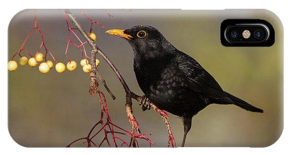 Blackbird Yellow Berries IPhone Case