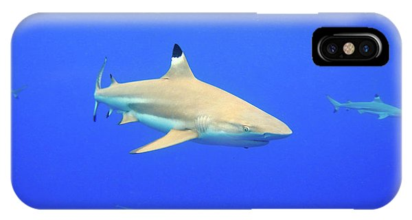 Blacktip Reef Shark IPhone Case
