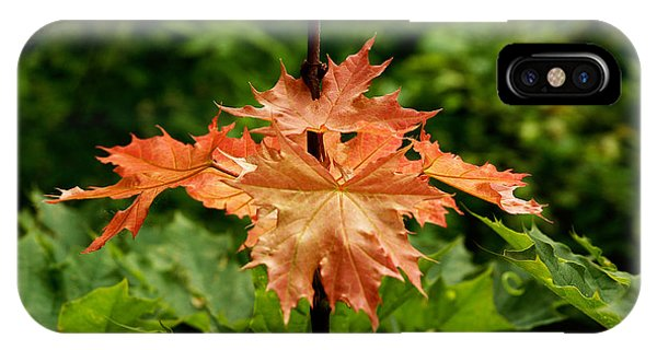 Blazing Maple Leaves IPhone Case