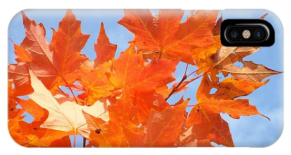 IPhone Case featuring the photograph Blazing Maple by Barbara Von Pagel