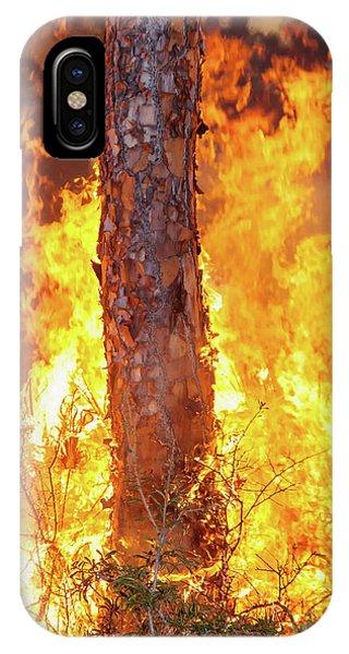 Blazing Pine IPhone Case