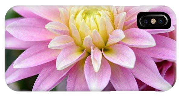 Blessings Dahlia IPhone Case