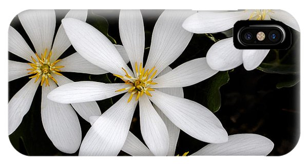 Sanguinaria IPhone Case