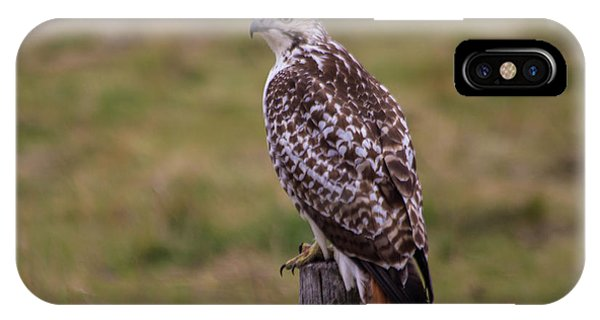 Red Tail Hawk iPhone Case - Bloody Talons  by Aaron J Groen