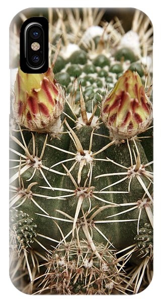 Blooming Cactus1 IPhone Case