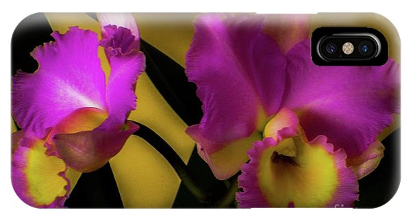 Blooming Cattleya Orchids IPhone Case