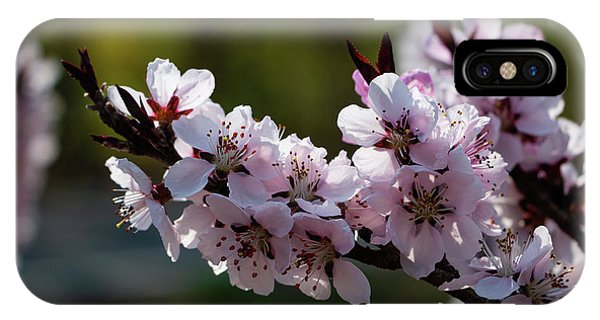 Blooming Peach Tree IPhone Case