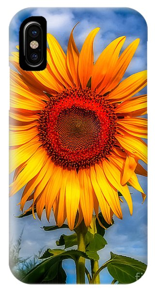 Sunflower Seeds iPhone Case - Blooming Sunflower  by Adrian Evans