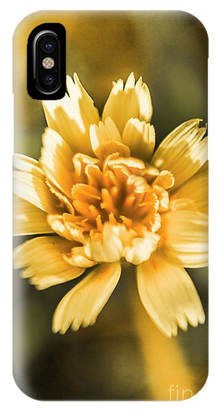 Garden Wall iPhone Case - Blossoming Dandelion Flower by Jorgo Photography - Wall Art Gallery