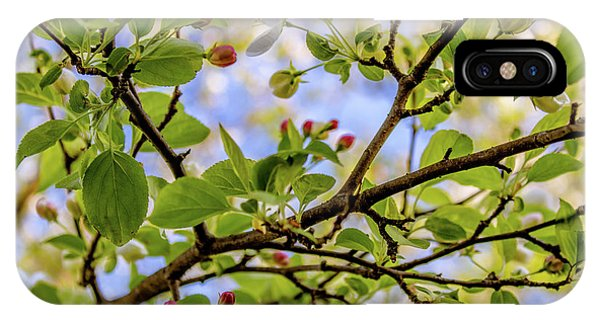 Blossoms And Leaves IPhone Case
